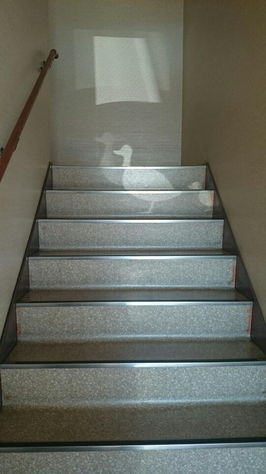 階段にカモくん親子